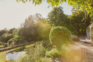 Sunny summer garden with green trees - HOXF01409