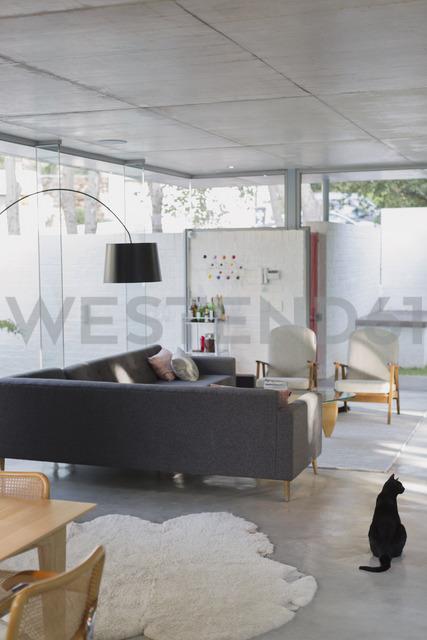 Black cat in luxury home showcase interior living room - HOXF02006 - Tom Merton/Westend61