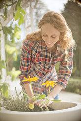 Woman planting flowers in flowerpot - HOXF03095