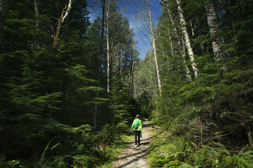Rear view of hiker walking on pathway amidst trees in forest - CAVF00134