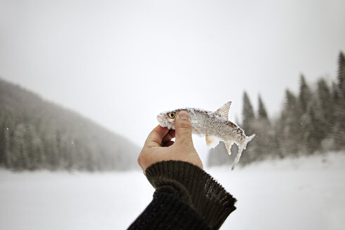 Cropped image of man holding frozen fish against clear sky - CAVF00593