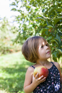 Curious girl picking apple in orchard - CAIF05458