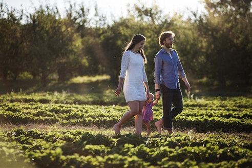 Happy family walking on field in farm - CAVF01291