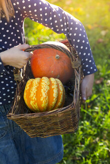 Girl carrying basket with pumpkins in autumn, partial view - LVF06766