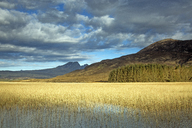 Scenic view sunny marsh and hills, Loch Carron, Wester Ross, Scotland - CAIF07531