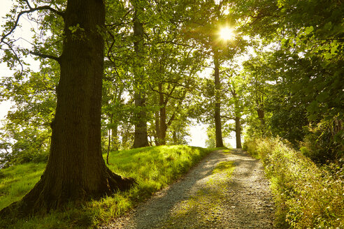 Sunny tranquil footpath through green forest, Lake District, England - CAIF07582