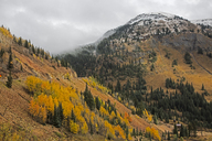 Autumn trees on remote hillside, near Silverton, Colorado, United States - CAIF07585