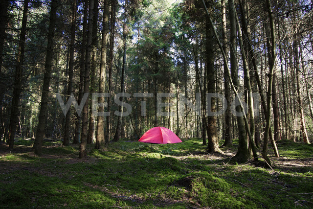 Tent in forest - CAVF01800
