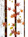 Autumn leaves - JTF00947