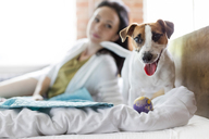 Woman watching Jack Russell Terrier dog with toy on bed - CAIF09679