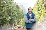 Portrait smiling male farmer harvesting in apple orchard - CAIF09943