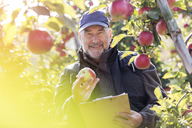 Portrait smiling male farmer with clipboard inspecting red apples in sunny orchard - CAIF09949