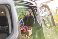 Male farmer loading red apples into car in orchard - CAIF09976