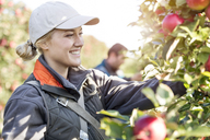 Smiling female farmer harvesting apples in orchard - CAIF09985