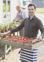 Portrait smiling plant nursery worker carrying crate of strawberries - CAIF10338