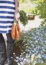 Woman holding bunch of fresh harvested carrots in garden - CAIF10341