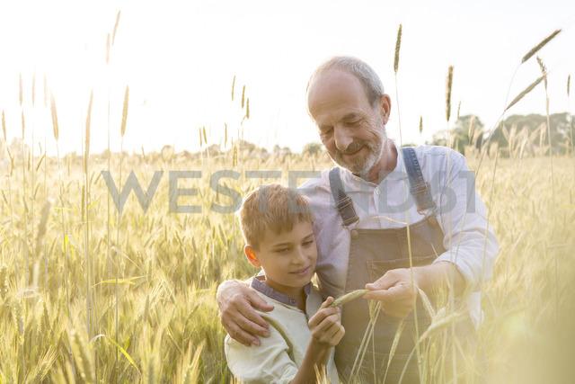 Farmer grandfather and grandson examining rural wheat crop - CAIF13025
