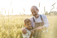 Farmer grandfather and grandson examining rural wheat crop - CAIF13025