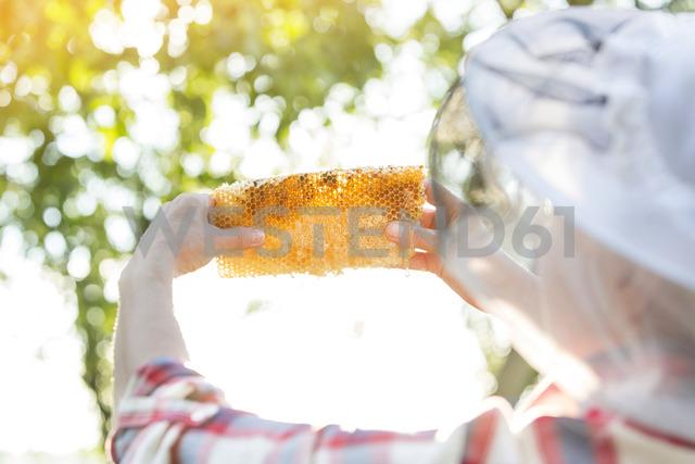 Beekeeper examining honeycomb - CAIF13031