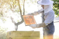 Beekeeper in protective clothing examining bees on honeycomb - CAIF13046