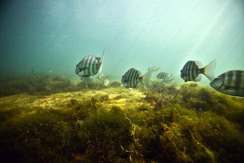 Fishes swimming underwater - CAVF06510