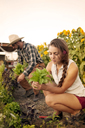 Woman looking at plant while working in farm - CAVF06873