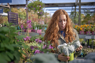 Woman looking at potted plant while standing in plant nursery - CAVF06897