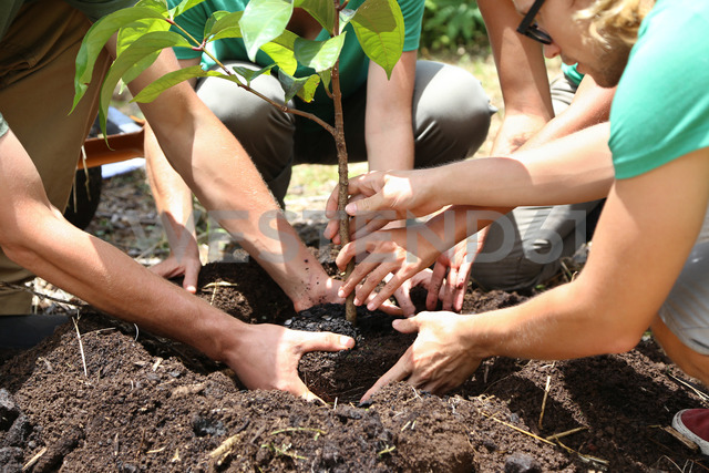 People planting tree seedling together - CAIF15711