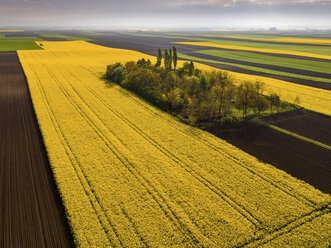 Serbia. Agricultural fields with yellow rape field, aerial view at summer - NOF00018