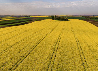 Serbia. Agricultural fields with yellow rape field, aerial view at summer - NOF00021
