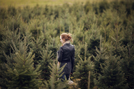 Woman with hand saw looking at trees while walking in pine tree farm - CAVF08328