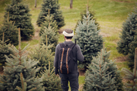 Rear view of man with backpack walking in pine tree farm - CAVF08334