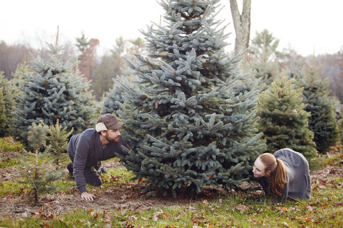 Couple selecting Christmas tree at pine tree farm - CAVF08337