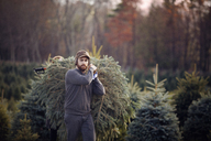 Man carrying chopped pine tree while walking in tree farm - CAVF08340