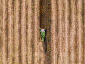Serbia, Vojvodina, Combine harvester on a wheat, aerial view - NOF00025