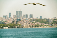 Asia, Turkey, Istanbul, Besektas, Bosphorus, Dolmabahce Palace, flying bird in the foreground - TAMF00972