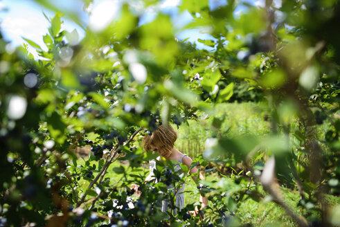 Girl picking blueberries in farm - CAVF10383