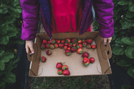 Midsection of girl holding strawberries in container while standing at field - CAVF10521