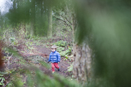 High angle view of happy boy walking in forest - CAVF10530