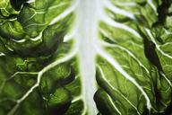 Close-up of lettuce leaf - CAVF11590