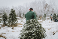 Rear view of man carrying Christmas tree while walking in farm - CAVF12594
