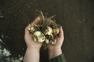 Cropped image of girl holding root vegetables on field - CAVF12903