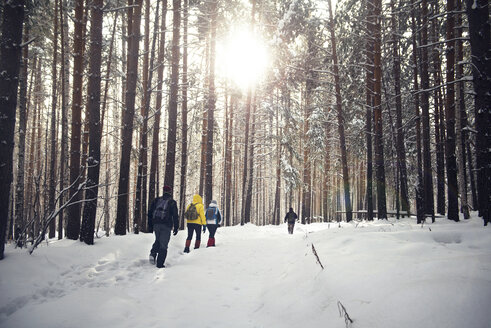 Rear view of friends walking in snow covered forest - CAVF12996