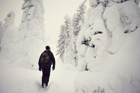 Rear view of hiker carrying backpack while walking in snow covered forest - CAVF13014