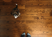 Low section on man with Shih Tzu standing on hardwood floor at home - CAVF14571