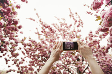 Low angle view of woman photographing flowering branches through smart phone - CAVF15018