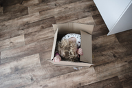 High angle view of happy girl sitting in cardboard box at home - CAVF15746