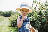 Portrait of girl eating raspberry while harvesting at farm - CAVF15818