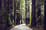 Empty road amidst redwood trees at state park - CAVF16229