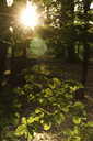 Scenic view of trees growing in forest during sunny day - CAVF17370